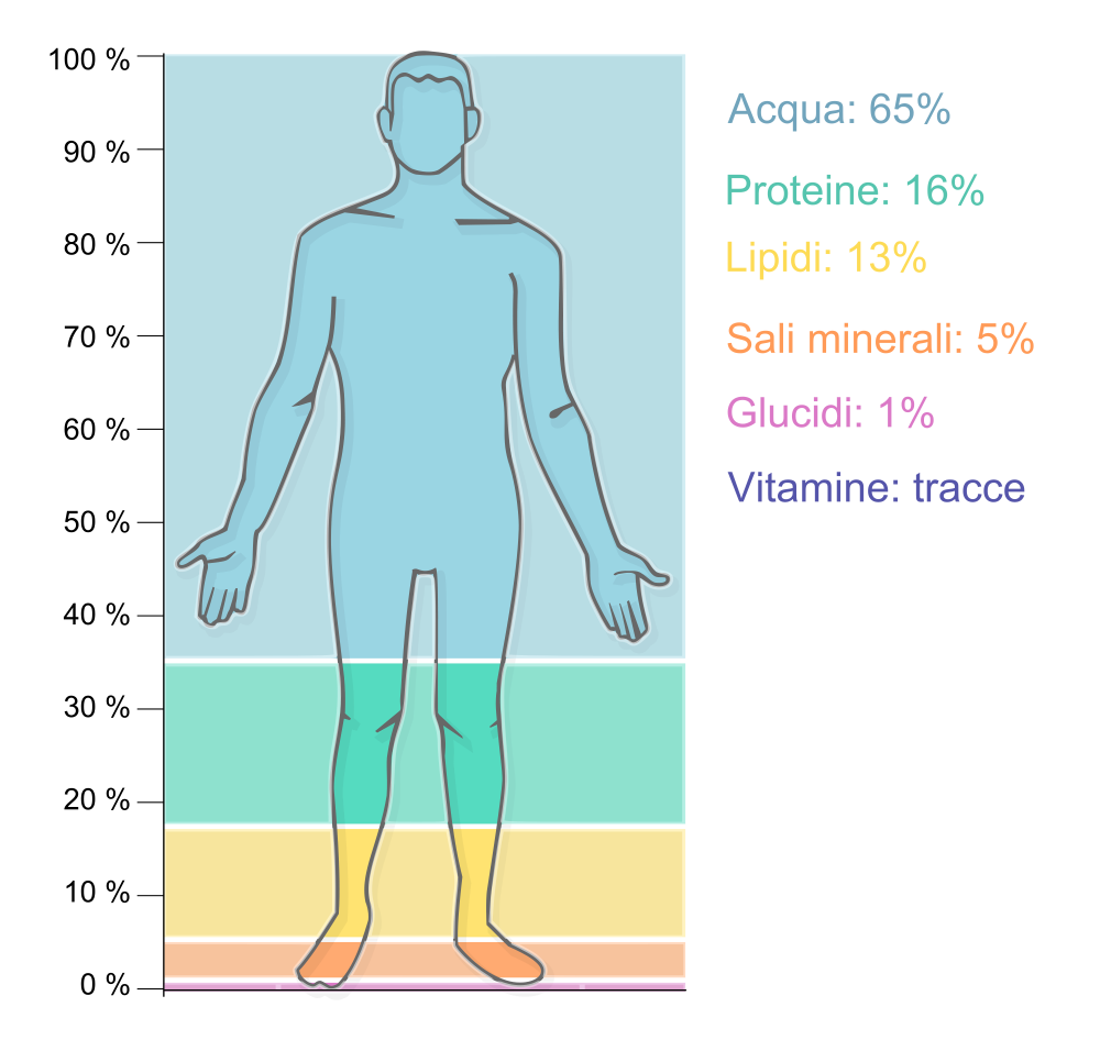 2000px-Human_body_concentrations.svg
